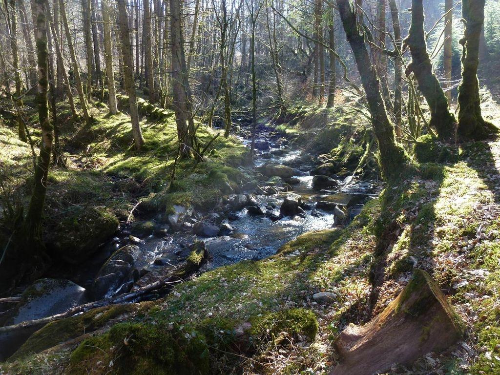 A-stream-in-Hafod-forest-Cwmystwyth