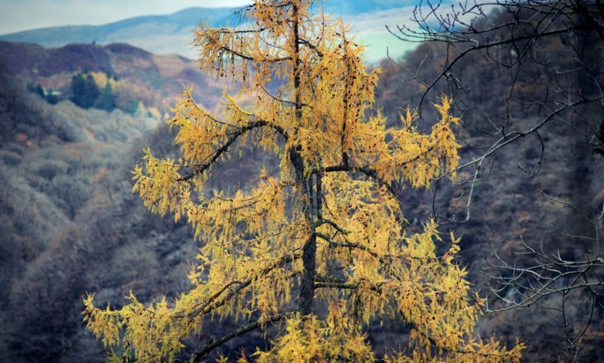 Autumn-comes-to-the-valley