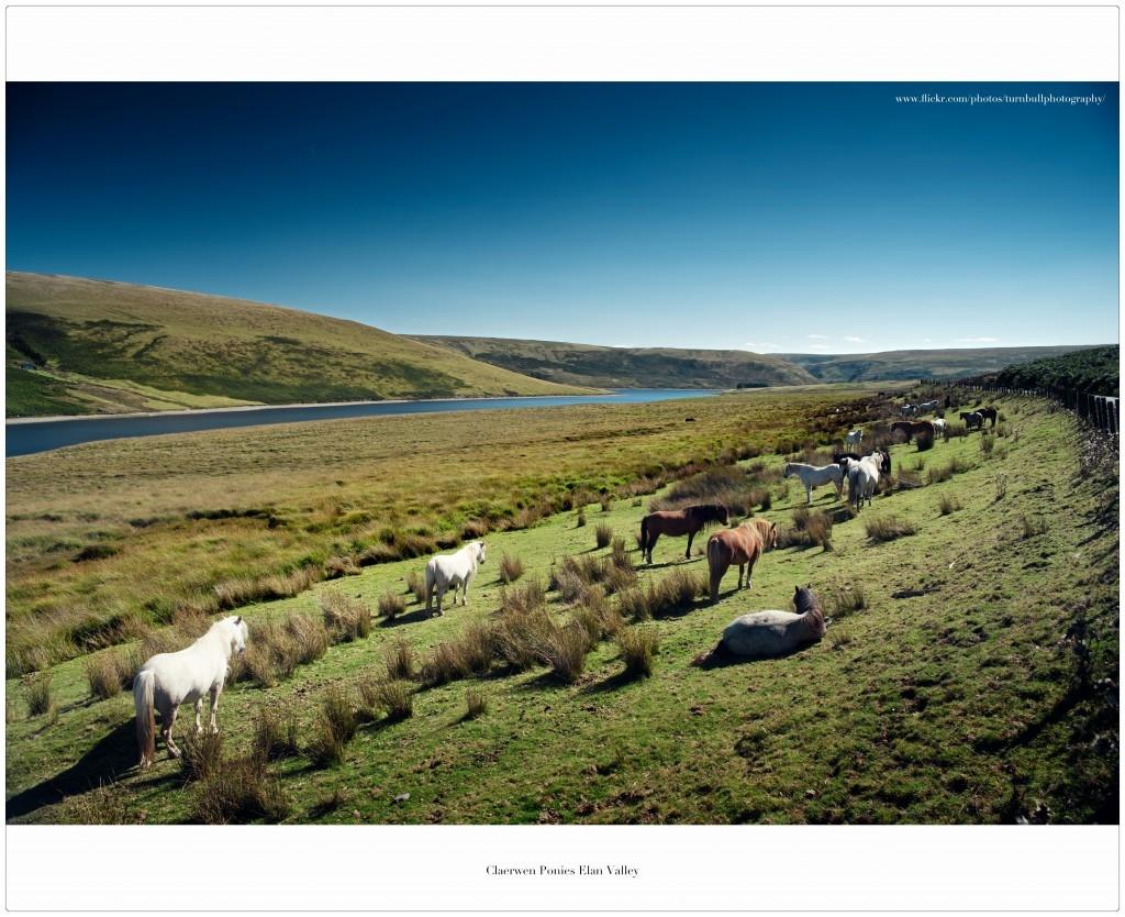 Horses enjoying the hills above Elan