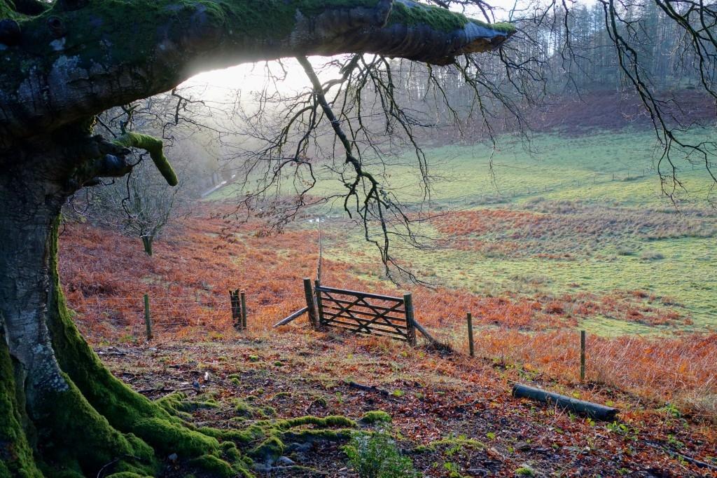 January in Hafod