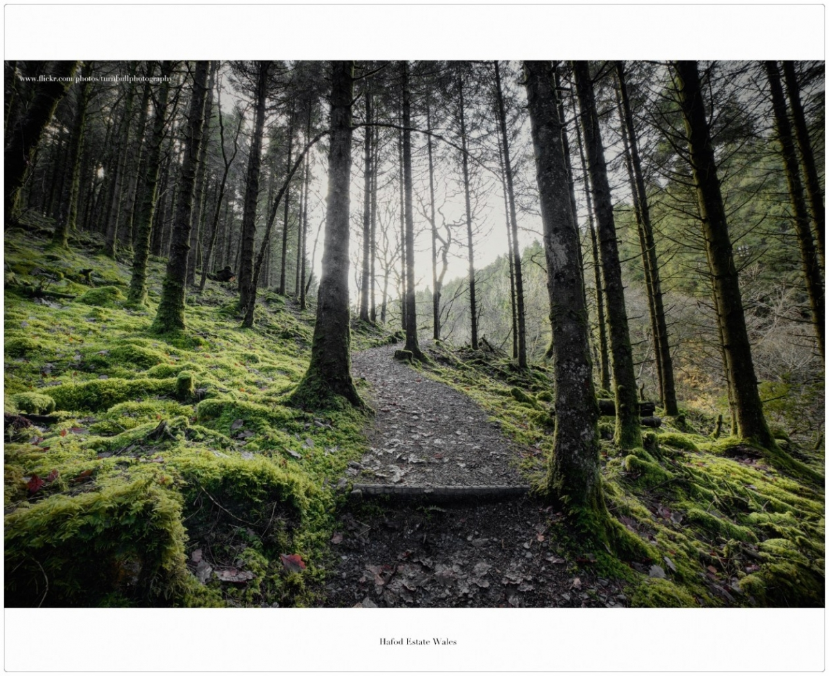 Hafod forest...always inspiring and uplifting