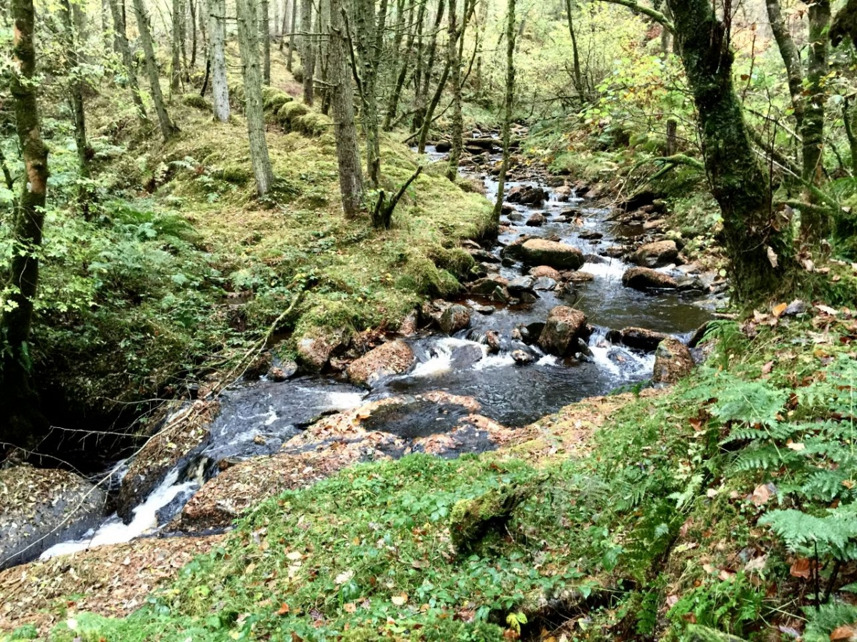 A walk in Hafod Forest is just so beautiful whatever the weather.