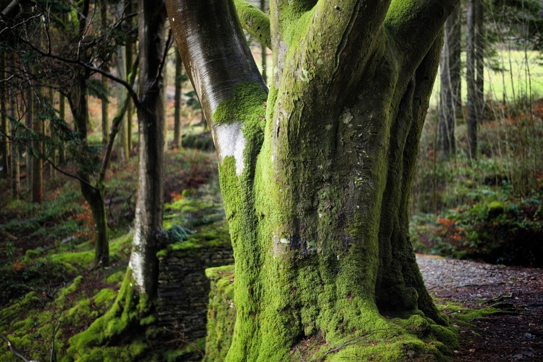 Hafod estate is perfect for walking dogs for miles, photography, picnicking by the river and just enjoying the trees!