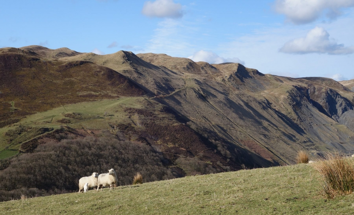 Sheep-and-mining-valley