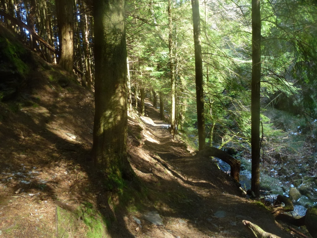 The-joy-of-those-forest-walks