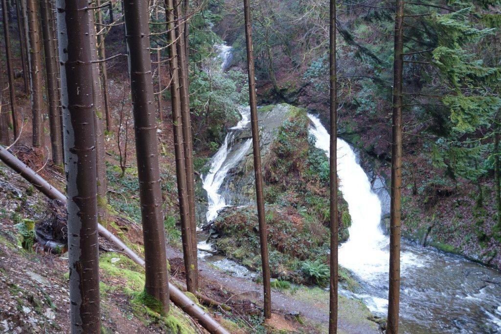 Stunning views in Hafod Forest